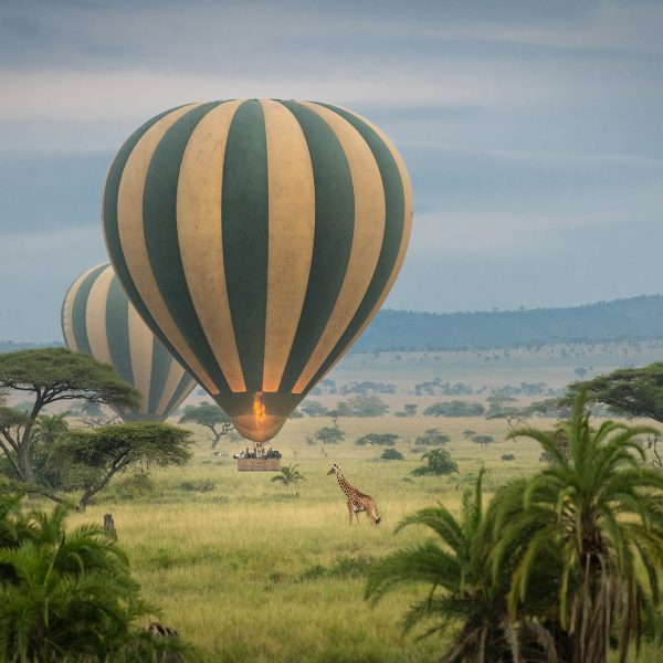 Wildlife Photography in the Serengeti, Africa